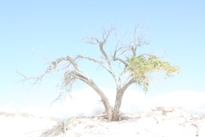 White Sands National Park